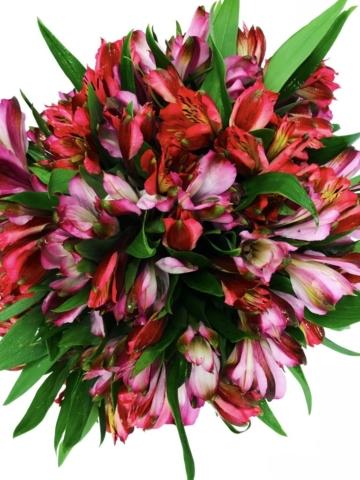 Flower Topiary, modern flower design
